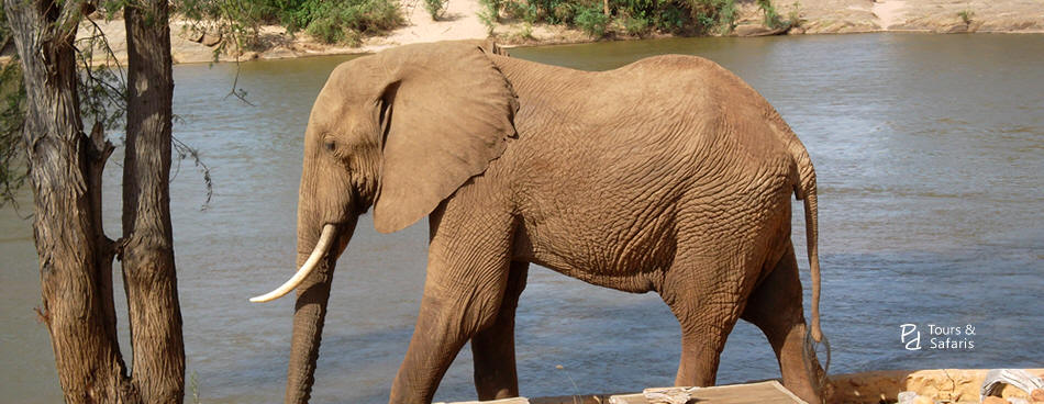 2 Days Tsavo East and West Safari from Mombasa