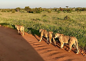 On safari with PD Tours_10