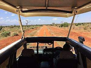 On safari with PD Tours_8