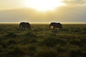 On safari with PD Tours_9